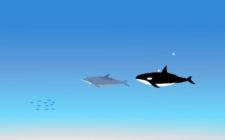 dolphin tag